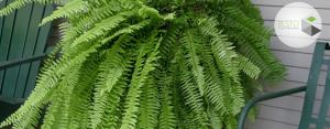 گیاهان مناسب دیوار سبز یا باغ عمودی